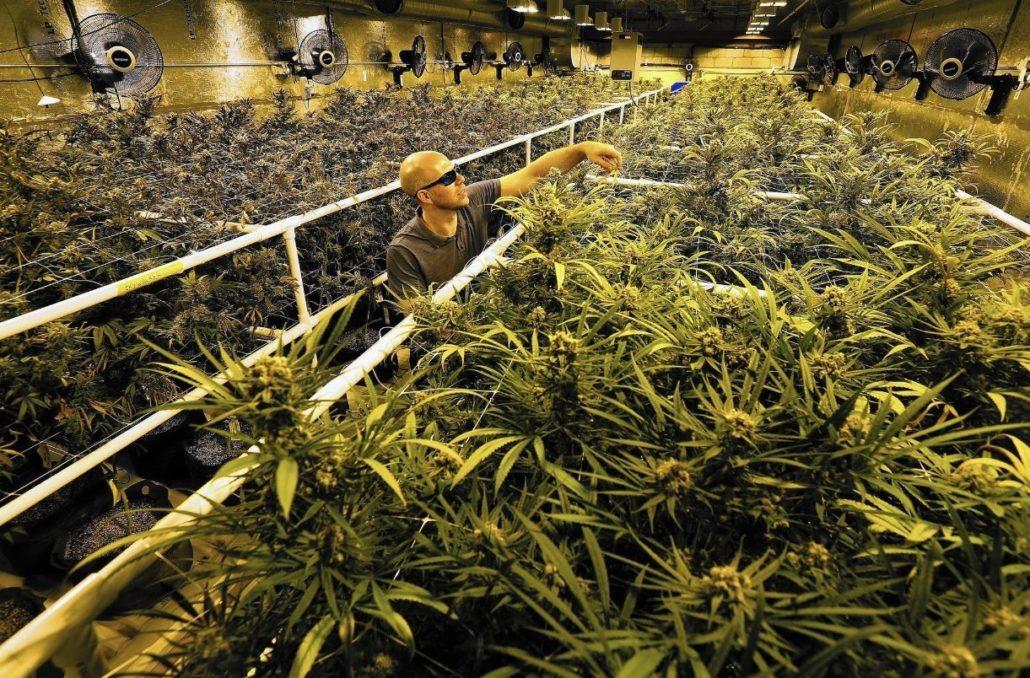 Washington State Sales Tax 2017 >> Washington Marijuana Revenues And Health Washington State